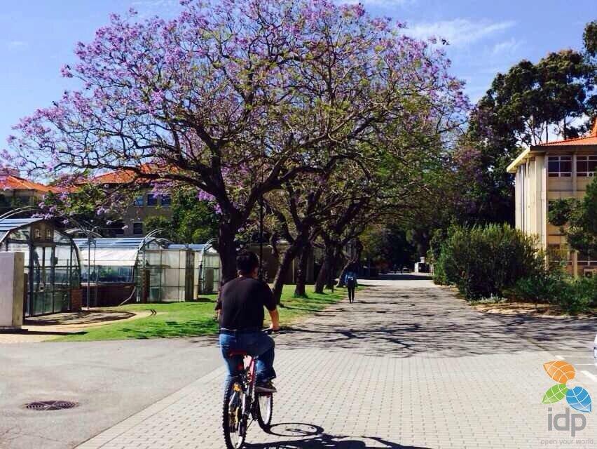 百年名校西澳大学:低调奢华有内涵