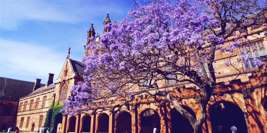 悉尼大学风景