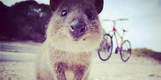 易申网:世界上最快乐的动物——自拍狂
