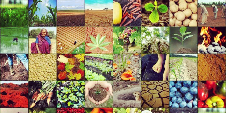 澳洲留学读农业专业 就业前景一片光明