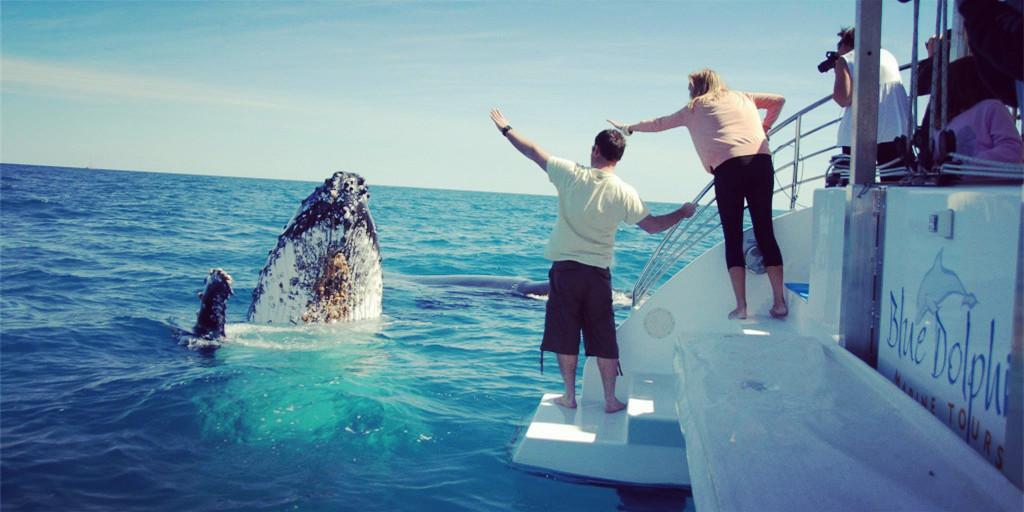 澳洲最佳观鲸时节 留学超赞体验