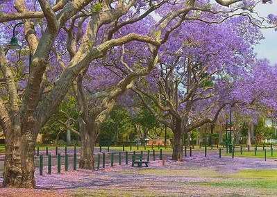 澳洲邦德大学排名