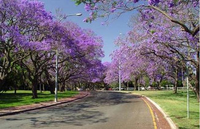 2017昆士兰大学世界排名最新一览  澳洲顶尖名校不容错过