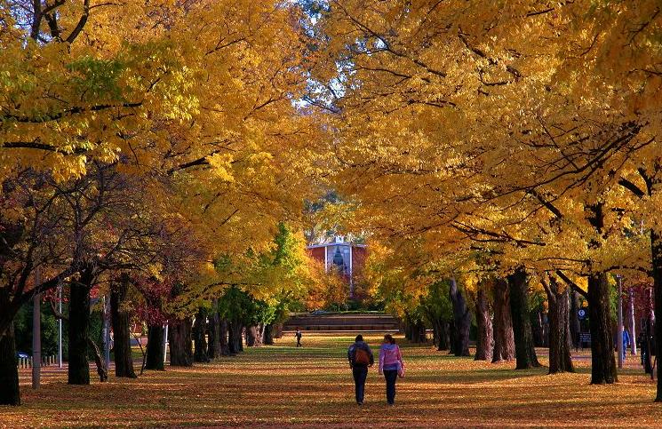 科廷大学悉尼校区怎么样?5大理由让你坚定选择悉尼校区