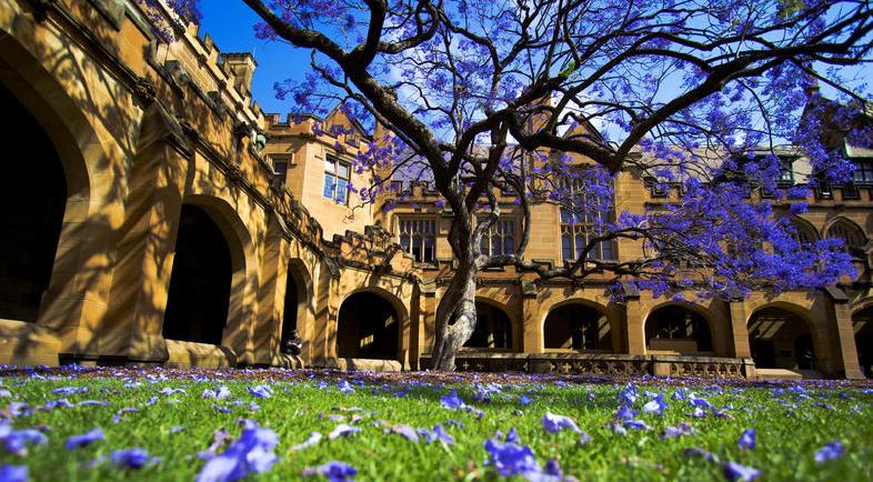 澳洲悉尼大学学费新鲜出炉 本科研究生16大学院学费汇总