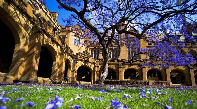 悉尼大学优势专业汇总一览  名校热门专业开启留学新篇章