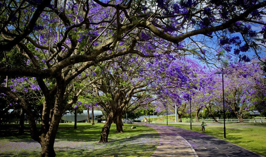 昆士兰大学本科申请条件大揭秘以及申请流程介绍