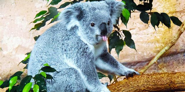 母校没有最好学科?去澳洲留学吧!这些优势你要知道