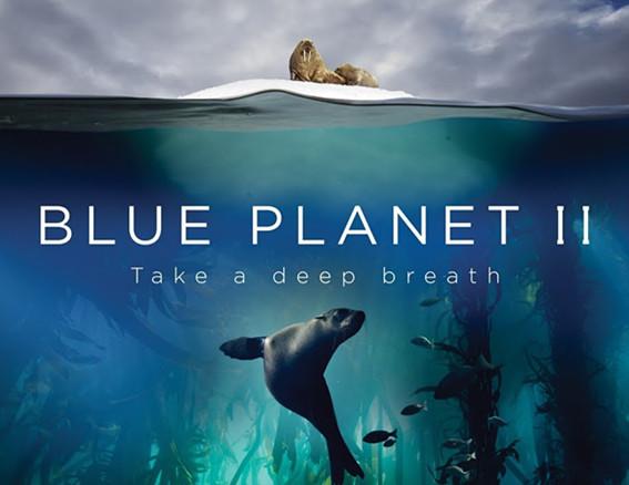 豆瓣评分9.9的BBC良心大作!澳洲海洋科学引关注