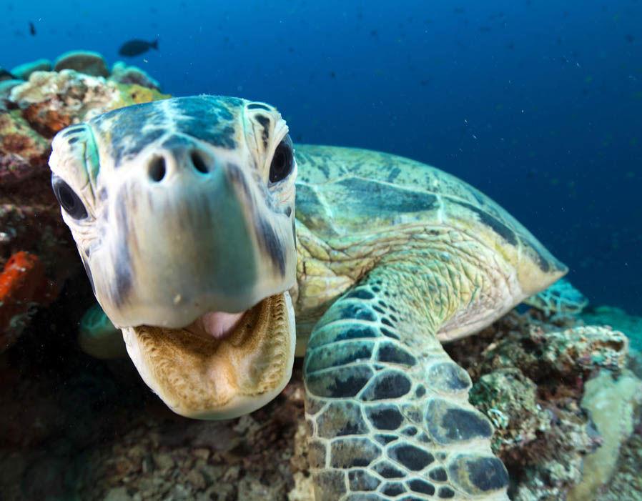 澳洲海洋科学.塔斯马尼亚大学,蓝色星球2