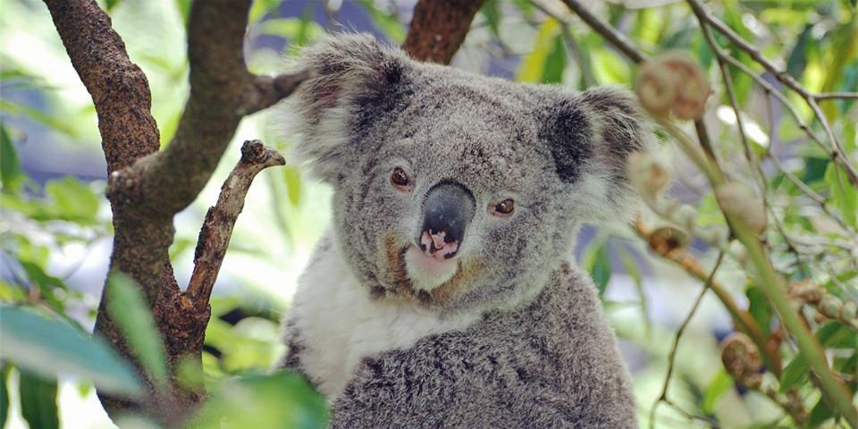 昆士兰大学,澳洲大学申请,澳洲留学案例