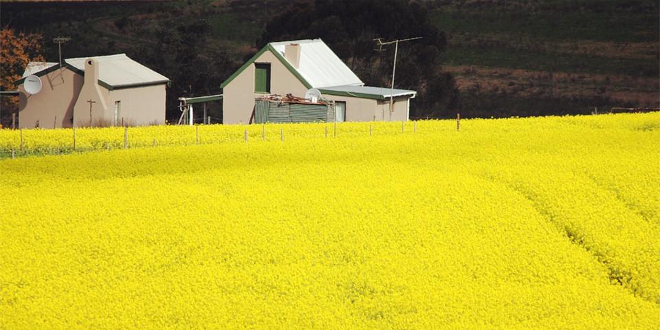 去澳洲留学当农民?嗯!年薪12万刀,还能移民