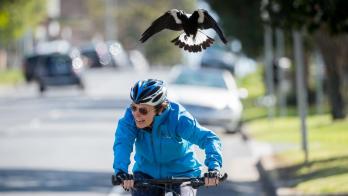 澳洲留学感受,澳洲鸟类,澳洲留学安全