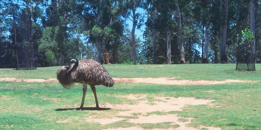 澳洲留学,澳洲留学好处,澳洲旅游