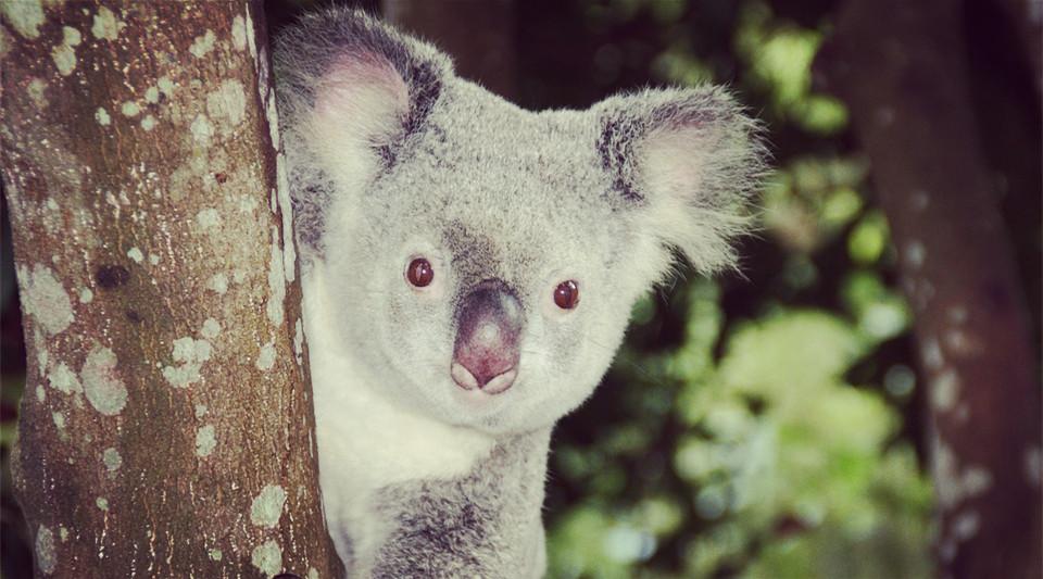 澳洲大学申请,墨尔本大学幼教专业,澳洲留学