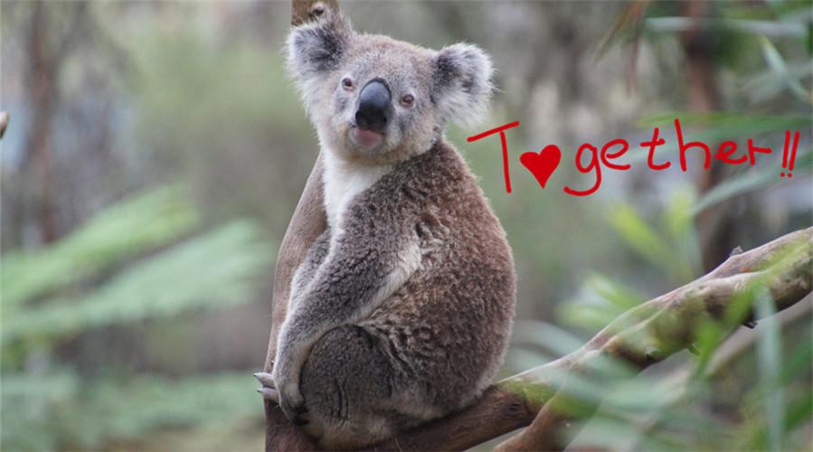 澳洲留学生聚众狂撸神奇动物是种怎样的体验?