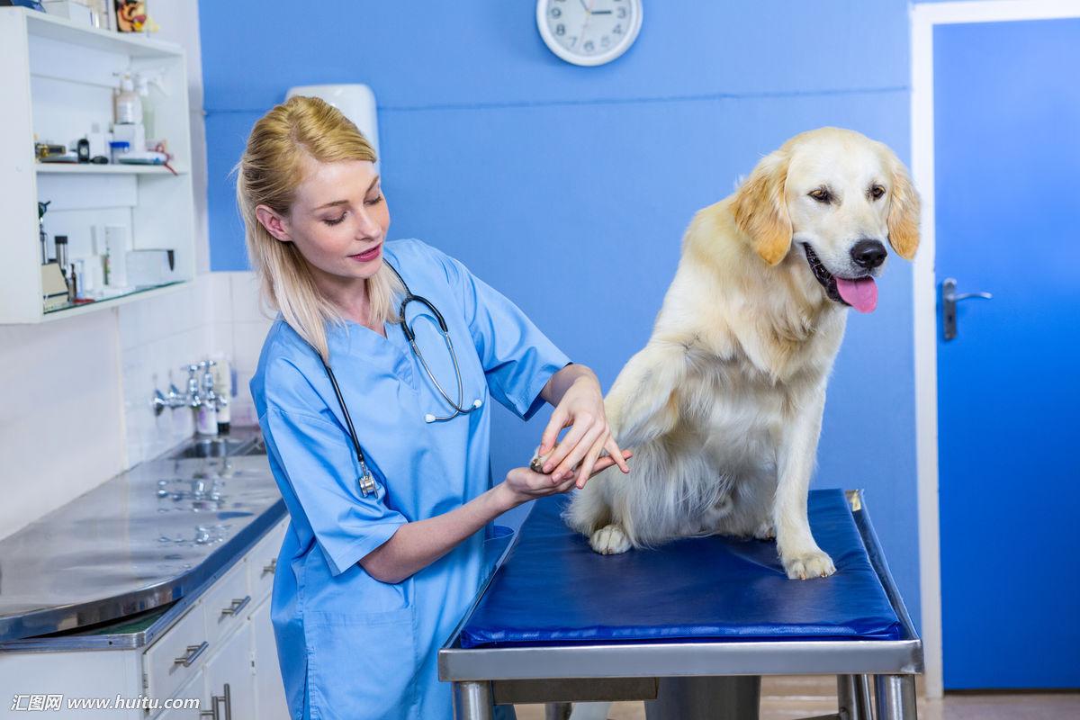 澳洲兽医专业研究生申请条件:高薪好就业