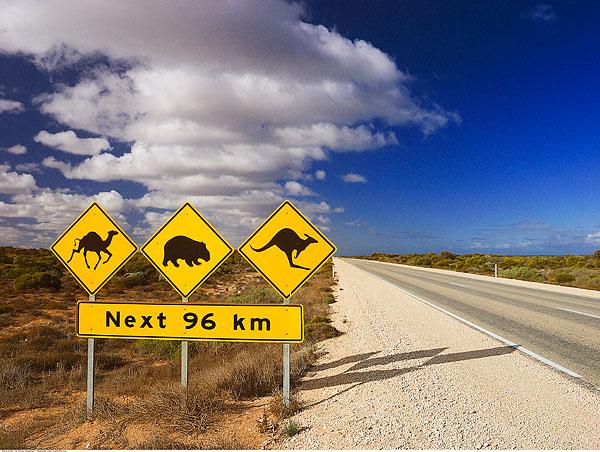 澳洲热门研究生留学专业,试试转专业?
