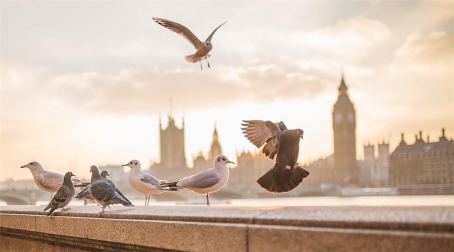 """#2019开学季# 留学生到英国后,哪些事情是要优先完成的""""头等大事""""?"""