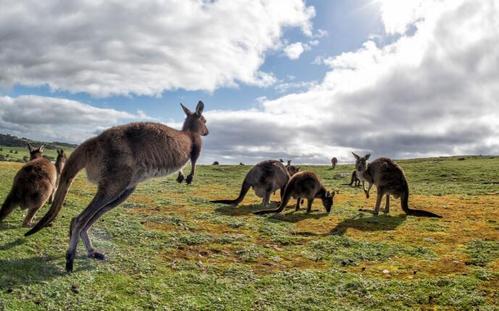 澳洲研究生入学条件包括哪些方面?