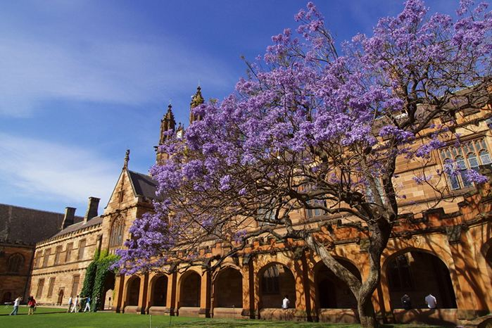 澳洲悉尼大学本科毕业率是多少?这些技巧教你顺利过关