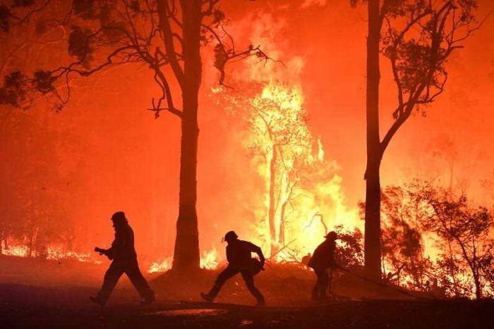 """【震撼】澳洲山林大火后,大自然是这么""""魔幻般""""的完成修复的!"""