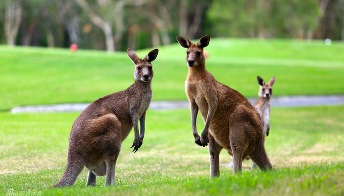 【澳洲前线报道】真庆幸,我是澳洲留学生!