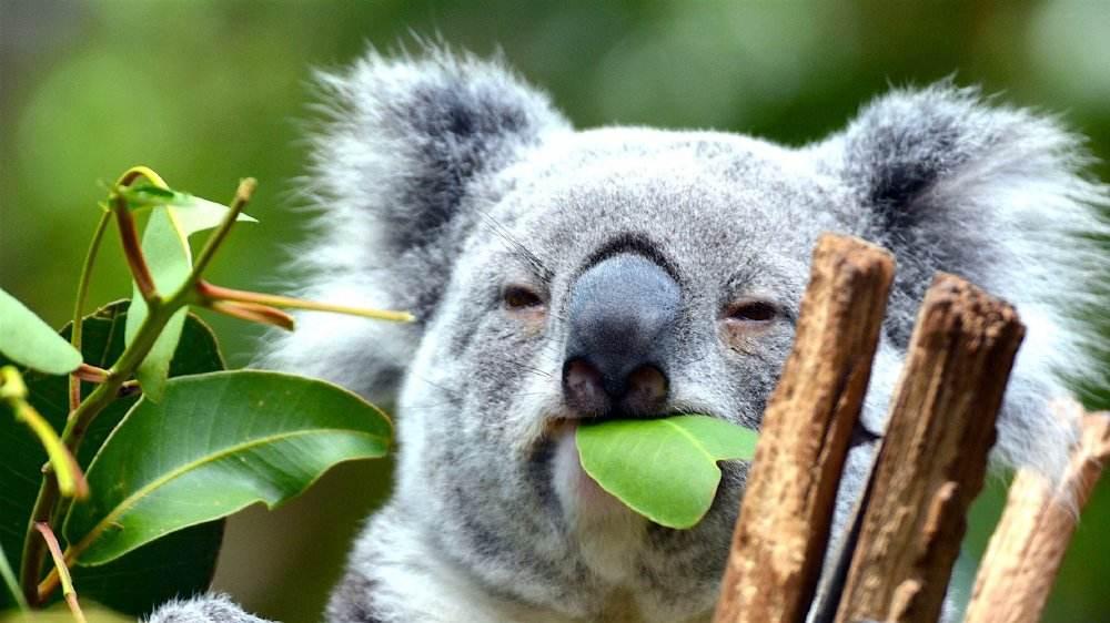 三本可以申请澳洲八大吗?提升成绩是关键