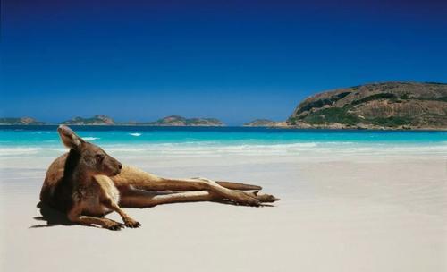 留学澳大利亚环境工程,先看专业排名!